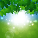 Ressort Sunny Nature Background Images stock