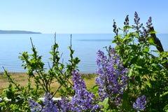 Ressort sur la mer d'Azov Image libre de droits