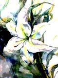 Ressort texturisé coloré de lis de fleur de ciel d'abrégé sur fond d'art d'aquarelle romantique illustration stock