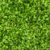 Ressort vert sans couture de modèle de feuilles ou fond frais d'été ENV 10 illustration stock