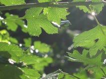 Ressort vert vert Images libres de droits