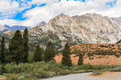 Ressortissant Forest Park d'Inyo Photo stock