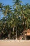 Ressource à la plage de Palolem, Inde Photos libres de droits