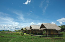 Ressource de paddy Photographie stock