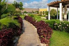 Ressource tropicale Image libre de droits
