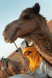Rest. They live together, camel driver and the animals. Tourist caravan rests on dunes near Merzouga, Marocco Stock Photo