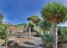 Rest area near Puntagorda (La Palma, Canary Islands) Stock Photos