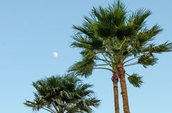 Rest area with Palm trees by the beach in Aruba Stock Photos