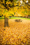 Rest Area Picnic Table Autumn Nature Season Leaves Falling Stock Photos