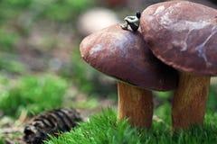 Rest auf einem Pilz Stockfotos