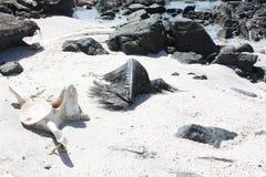 Rest av död Whale#4: Masirah ö, Oman Arkivbilder
