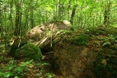 Rest av den megalitiska gravvalvet Forst Poggendorf 2 i Mecklenburg-Vorpommern, Tyskland royaltyfri foto