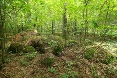 Rest av den megalitiska gravvalvet Forst Poggendorf 2 i Mecklenburg-Vorpommern, Tyskland royaltyfri fotografi