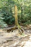 Rest av den stora trädstammen i den sandiga jordningen arkivbild