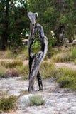 Rest av ett bränt träd efter brand Arkivfoto