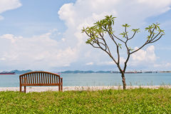 Rest bench and the tree at shore fit frame Royalty Free Stock Image