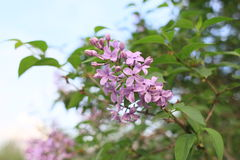 Nature of Botanical Garden Stock Photo