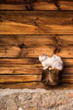 Rest. Cat resting on wooden wall Stock Image