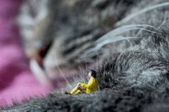 Rest on a cat Royalty Free Stock Photo