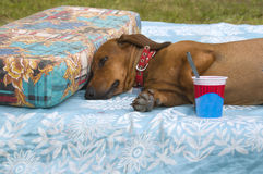 Rest after dessert Royalty Free Stock Images