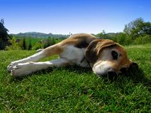 Rest dog Stock Images