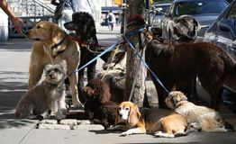 Dogs in New York Stock Image
