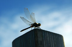 The rest of the dragonfly Royalty Free Stock Photos