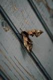 rest för fjärilsmalnatt Royaltyfria Bilder