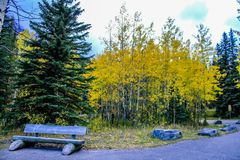 A rest among the fall colours. In Banff National Park, Alberta, Canada royalty free stock images