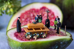 Rest in figs Royalty Free Stock Photo
