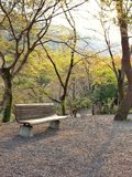 Rest in the park. In Japan Royalty Free Stock Photo