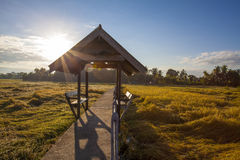 The rest pavilion and the path above the rice field. With the ray of light royalty free stock images