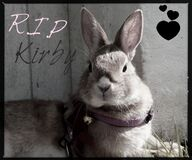 Rest in peace Kirby... Stock Photography