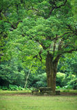 Rest place. Under big tree Royalty Free Stock Photo