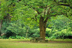 Rest place under big tree. In country side Stock Images
