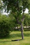 Rest unter dem Baum Stockbilder