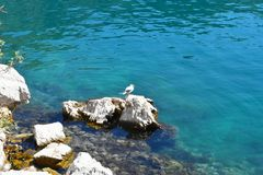 Rest on the wall. The seagull rests on the wall, his eyes are lost somewhere in the infinite blue sea, sunbathing by the sun`s rays Stock Image