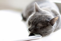 Rest after work Royalty Free Stock Photo