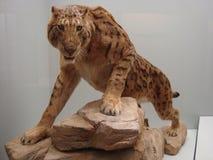 Restauración de un gato del sable-diente Foto de archivo libre de regalías