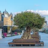Restauración del centro de ciudad con el nuevo parque Fotografía de archivo libre de regalías