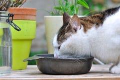 Restauración del gato Imagen de archivo libre de regalías