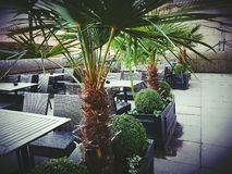 Restaurant bar bistro place palm trees. Green plants tables chairs wicker Stock Photos