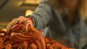 Crayfish. In the restaurant, the girl eats cancer, Crayfish stock video