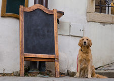 Restaurant menu board with cute dog Royalty Free Stock Photography