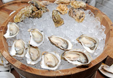 Restaurant of Oysters in the shell Royalty Free Stock Images