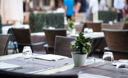 Restaurant Potted Plant Royalty Free Stock Photography