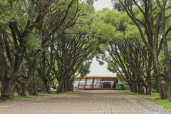 Restaurant under old trees Royalty Free Stock Photography