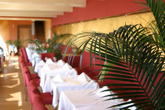 Restaurant view. Inside the restaurant: focus on the palm tree in the foregrund, rest out of focus Royalty Free Stock Photography