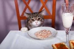 Restaurante para el gato Imagen de archivo libre de regalías
