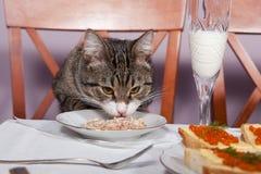 Restaurante para el gato fotografía de archivo libre de regalías